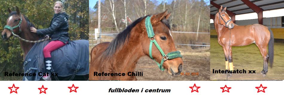 fullblodenicentrum
